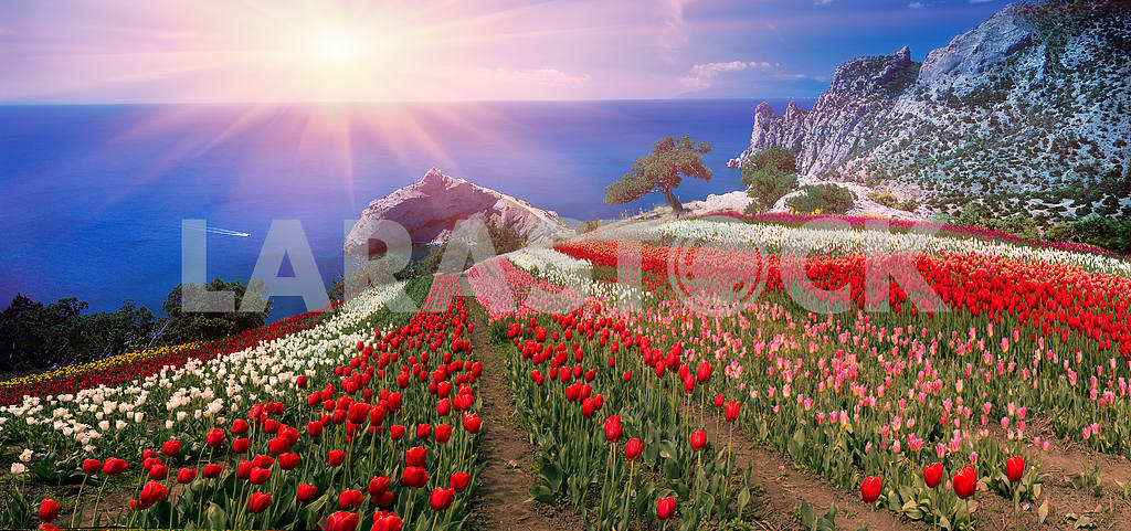 Sunrises and sunsets with tulips in the Crimea — Image 16006