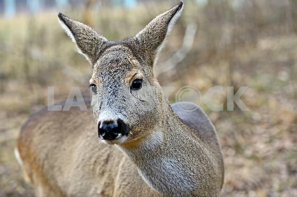 Red deer in their natural habitat — Image 1607