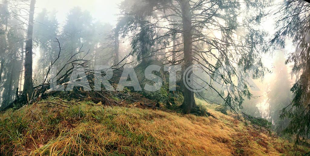 Misty forest. — Image 16070