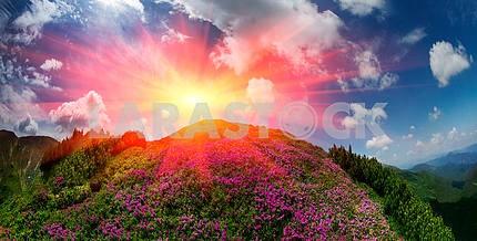 Цветущие горы Украины