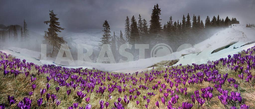 March Carpathians