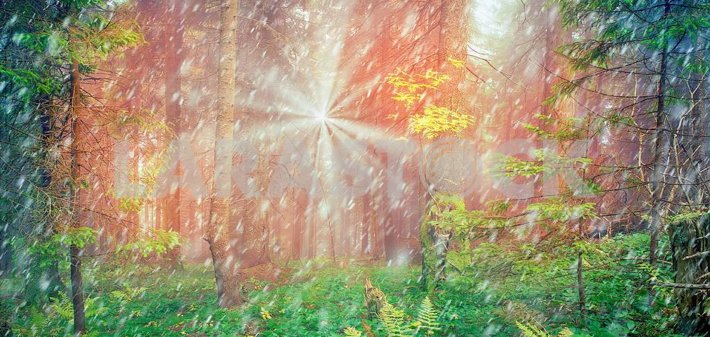 Сияние туманные леса — Изображение 16201