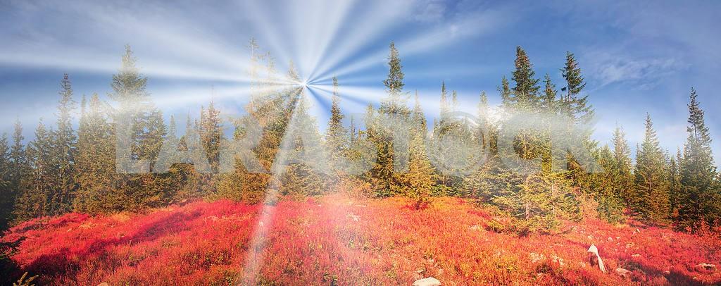Alpine autumn in Gorgany — Image 16232