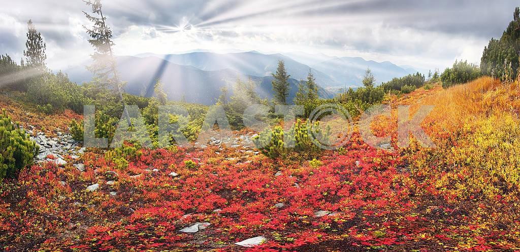 Alpine autumn in Gorgany — Image 16332