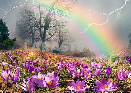 Crocuses are the first flowers in the mountains