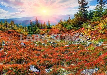 Golden blanket Carpathians