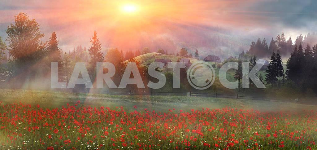 Alpine poppies in the Carpathians — Image 16386