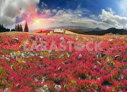 Golden blanket Carpathians