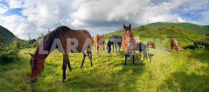 Mountain pastures of horses