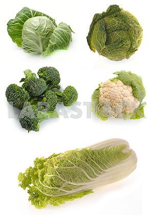 Set of pictures of cabbage