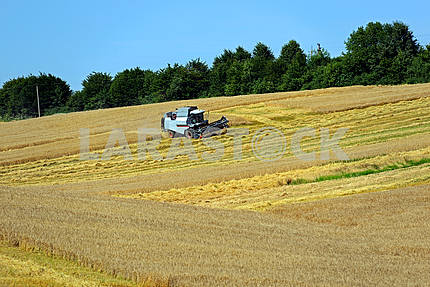 Harvesting wheat harvester