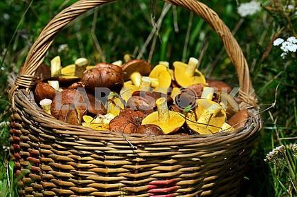 Mushrooms Butter