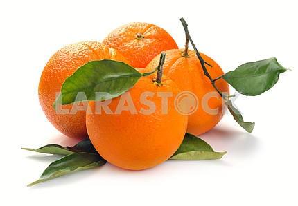 Group orange