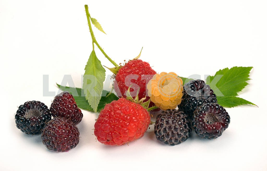 Black yellow and red raspberries — Image 17504