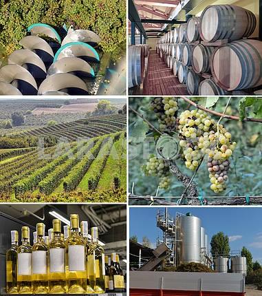 Набор изображений виноделия