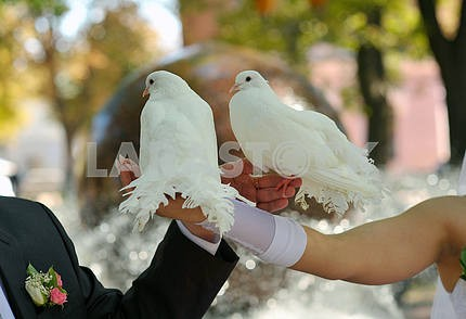 pair of doves and the bride and groom