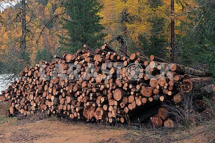 larch logs at logging