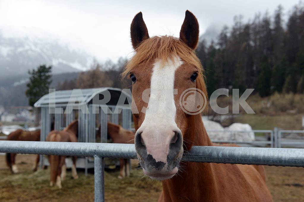 Horses eating hay — Image 17715