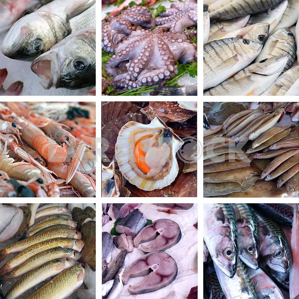 Set of images showcases the fishmarket — Image 17970