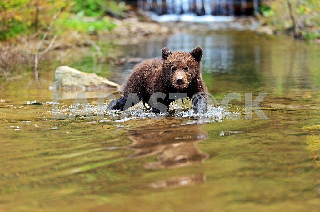 Little Bear — Image 1800