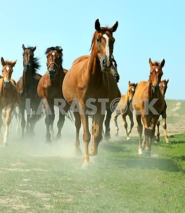 Horses on the farm in summer