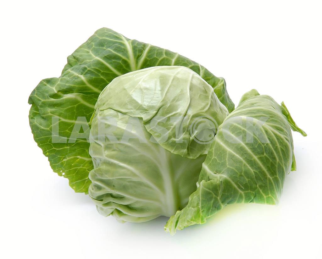 Cabbage — Image 18052