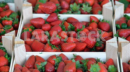 Strawberries in a box on the counter