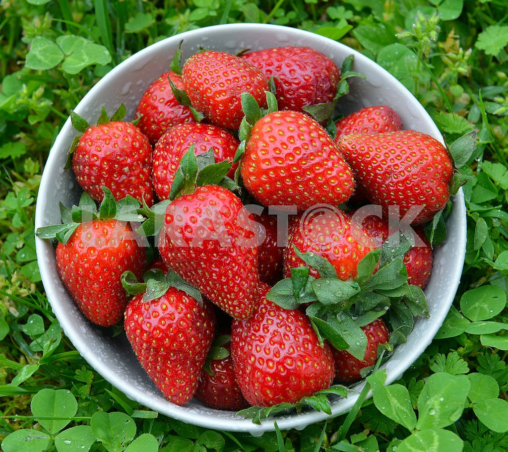 Strawberries in a bow — Image 18084