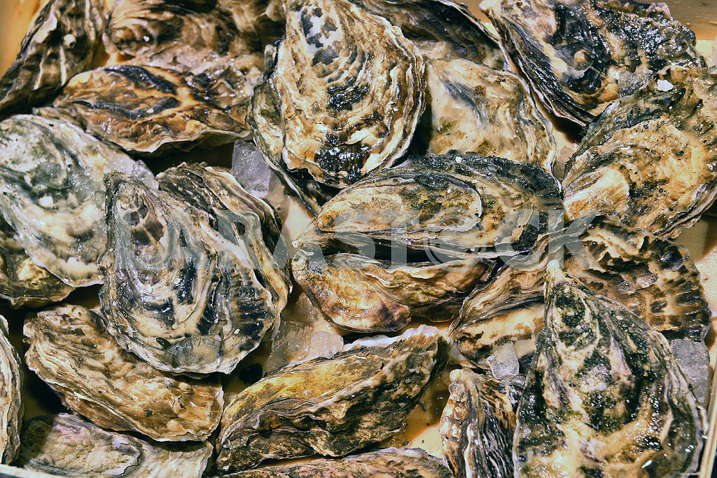 Oysters in ice on the counter — Image 18095