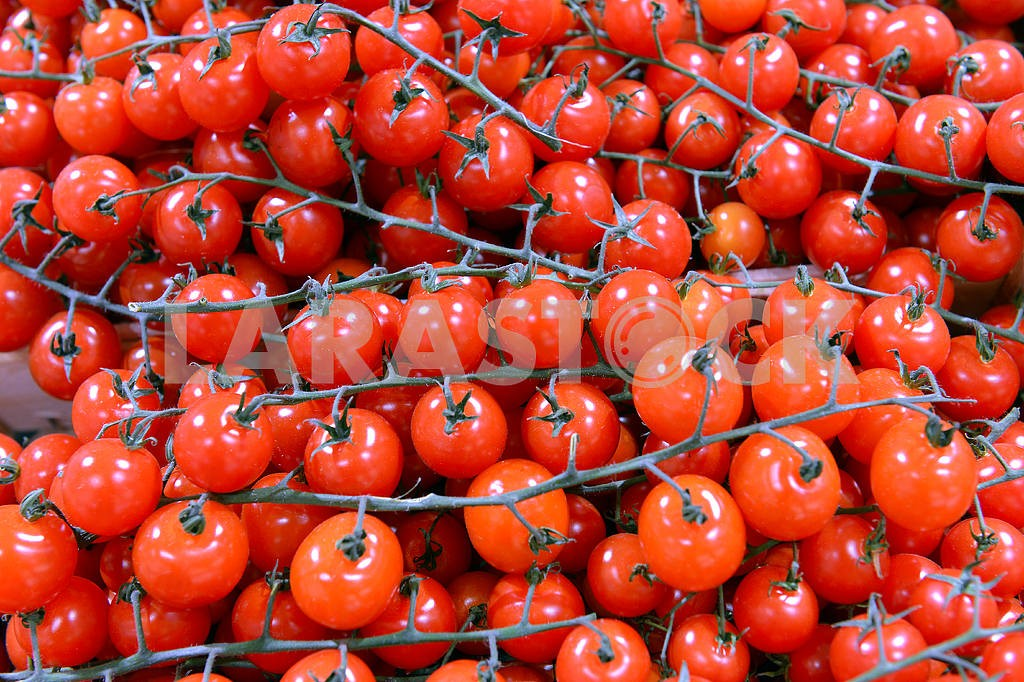 Cherry tomatoes on a branch — Image 18096