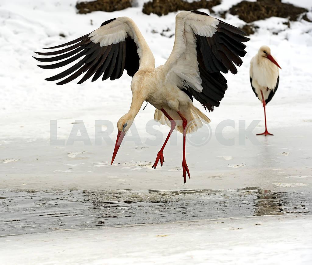 Stork in its natural habitat — Image 1811