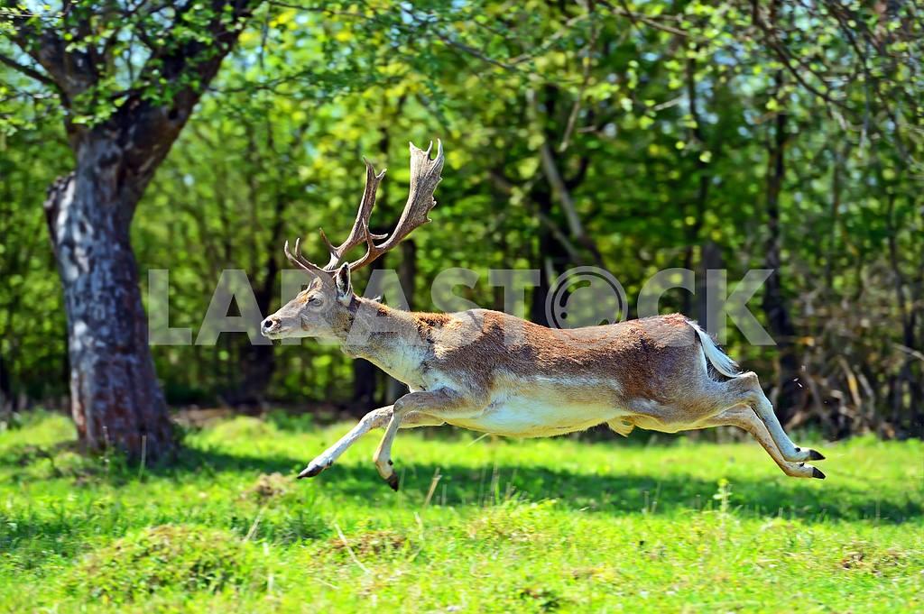 Deer — Image 1818