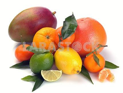 Set of citrus  fruits