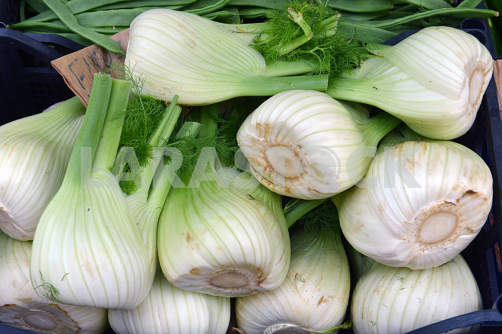 Fresh fennel — Image 18472