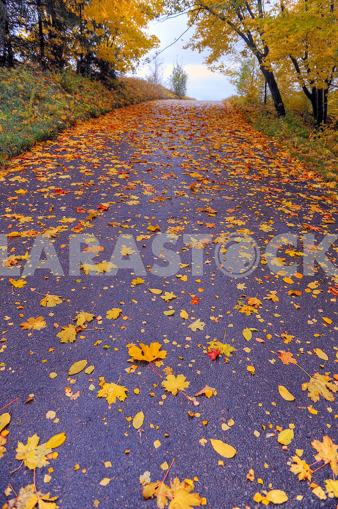 Path in park covered with autumn leaves — Image 18551