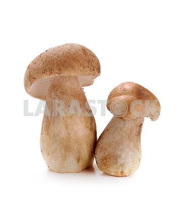 ceps mushrooms