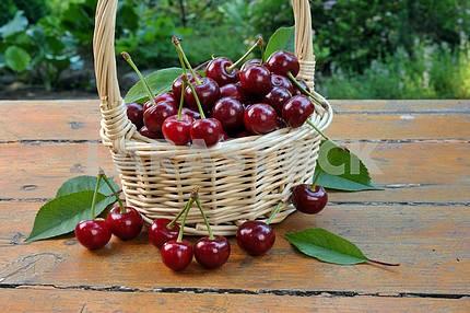 Спелые вишни в плетеной корзине