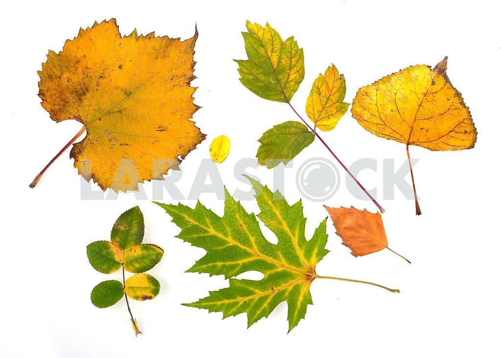 Autumn leaves — Image 18772