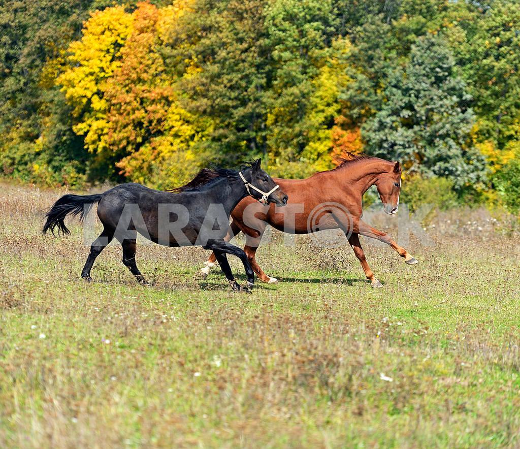 Horse — Image 1879