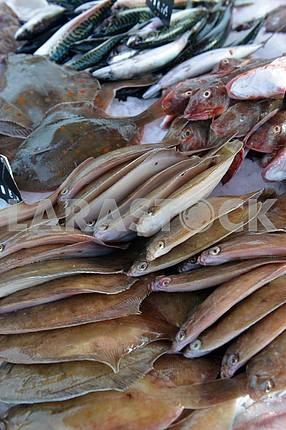 Камбала и другие рыбы и