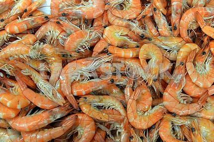 Shrimp  in the store