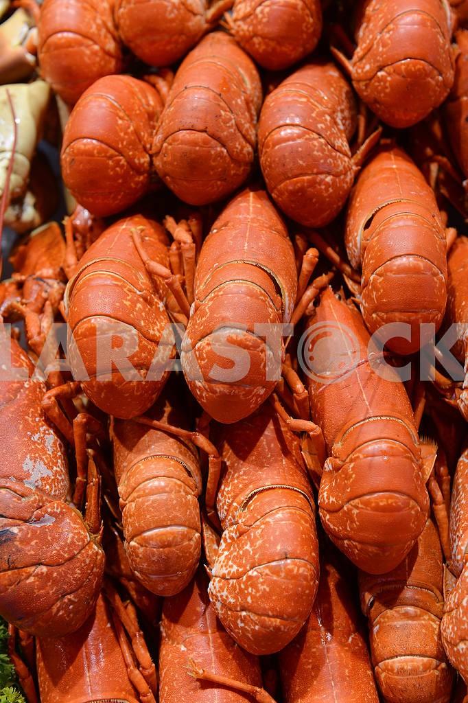 Cervical lobster on display — Image 18989