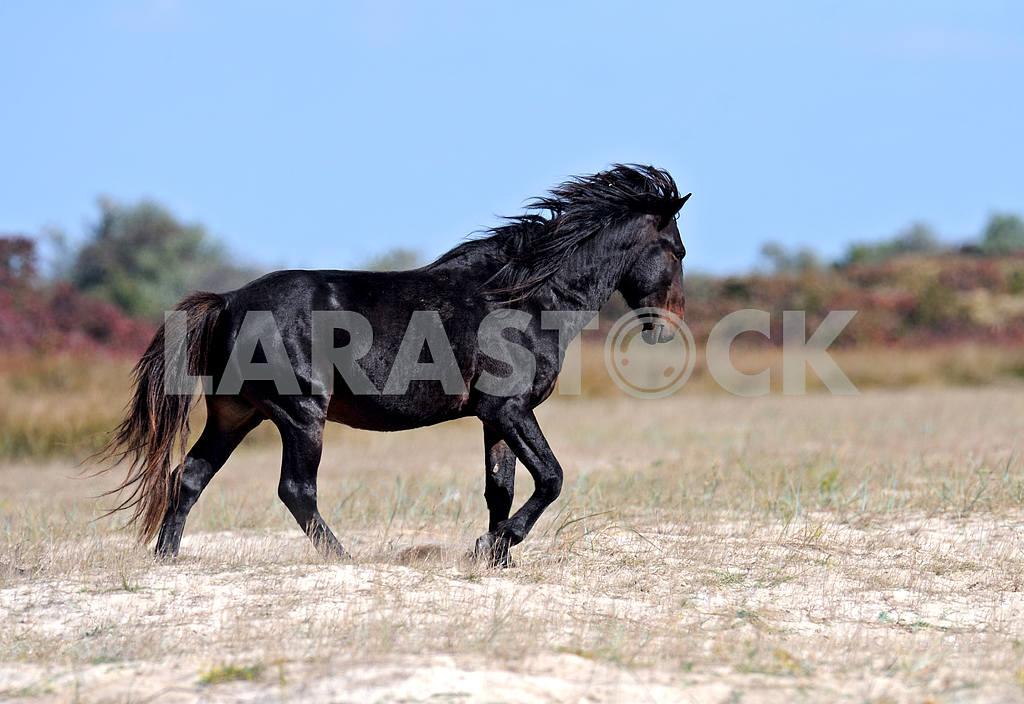 Horse — Image 1918