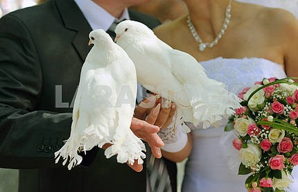 Pigeons and the bride and groom
