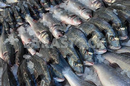 Dorado and sea bass in the fish shop