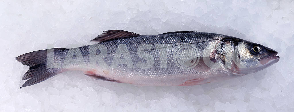 Seabass (Dicentrarchus labrax) on ice — Image 19430
