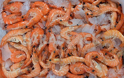 Shrimp on a bed of crushed ice