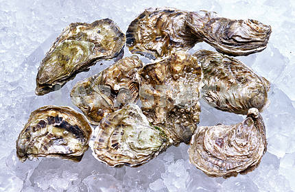 Closed oysters on ice
