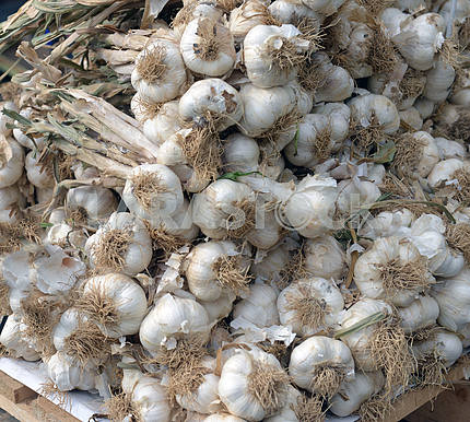 Garlic in a box on the market