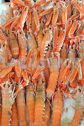 Fresh scampi for sale at a market